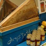 ハチミツイベントが開催♪
