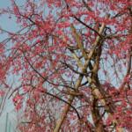 大桑ぐるぐる公園2013春_その15♪