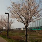 大桑ぐるぐる公園2013春_その4♪
