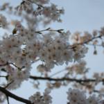 大桑ぐるぐる公園2013春_その25♪