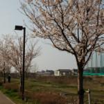 大桑ぐるぐる公園2013春_その5♪