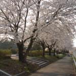 大桑ぐるぐる公園2013春_その22♪