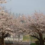 大桑ぐるぐる公園2013春_その29♪