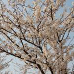 大桑ぐるぐる公園2013春_その8♪