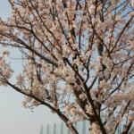 大桑ぐるぐる公園2013春_その6♪