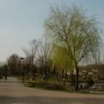 大桑ぐるぐる公園2013春_その17♪