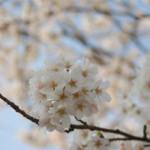 大桑ぐるぐる公園2013春_その28♪