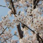 大桑ぐるぐる公園2013春_その1♪
