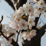 大桑ぐるぐる公園2013春_その2♪