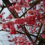 大桑ぐるぐる公園2013春_その12♪