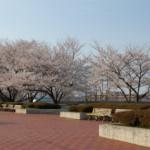 大桑ぐるぐる公園2013春_その23♪