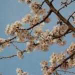 大桑ぐるぐる公園2013春_その3♪